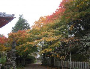境内の紅葉が見頃になってきました。