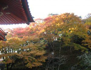 紅葉がだいぶ進みました。