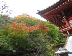 紅葉が色づき始めました。