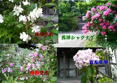5月 5月の花たち