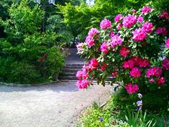 6月 石楠花