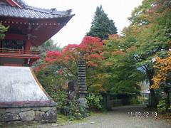 11月 紅葉のグラデーション