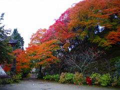 11月 紅葉真っ盛り